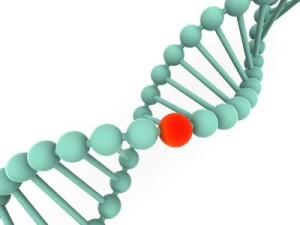 do genetics cause obesity