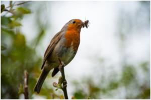eat like a bird