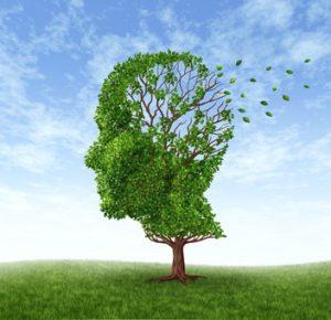 can diet prevent alzheimer's