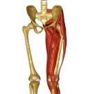 hip pain causes and treatment lateral