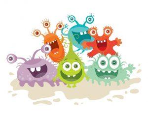 polyphenols gut bacteria